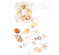 10pcs/box Natural Seashells Starfish Nail Decorations