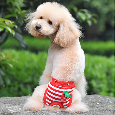 كلاب قطط بنطلونات ملابس الكلاب مخطط فاكهة أبيض أحمر أزرق قطن كوستيوم من أجل كلب البج Bichon فرايز أفطس كل الفصول انثى تصميم أنيق تصميم فريد